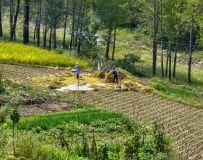 乡村收稻子的季节(24)
