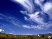 题目《草原风云》