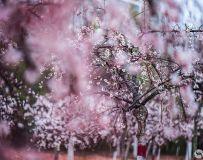 春暖花儿开...