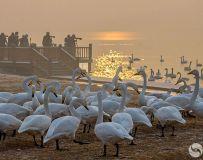 天鹅湖的早晨