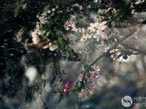 """""""徒步""""杯摄影月赛四月—《花开花落》作者:苗苗"""