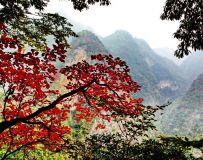 金丝峡红叶(8P)