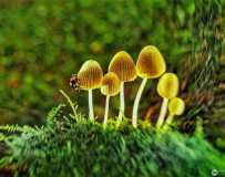 10月月赛《秋天里漂亮的蘑菇》(手机拍摄)