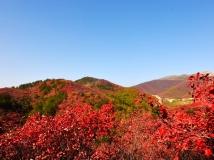黄冈红叶印象