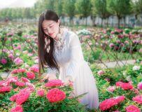 牡丹花开的季节(组照)
