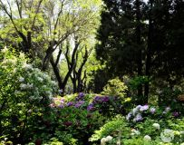 2021北京景山公园春季牡丹文化展(69)
