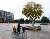 广场上的一棵树