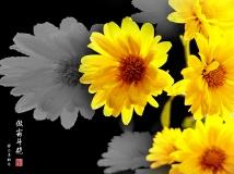 《残秋傲枝》----人民公园拍菊