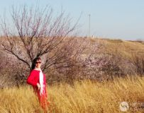 美女赏樱春意浓(43)