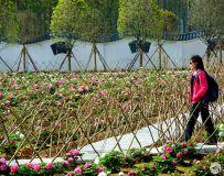 赏花的游客