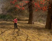 环境人像——柿子红满天(4)
