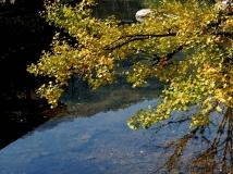 银树沟的水