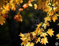 秋之约。秋叶(4)