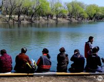 赏春(拍摄于北京玉渊潭公园)
