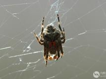 【2014年第4期月赛】蜘蛛