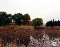 北京大运河森林公园(26)
