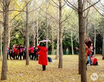 金秋北京奥森公园 红枫银杏彩叶飘飘(51)