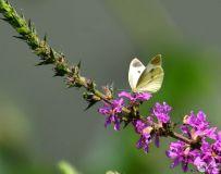花香引蝶来