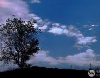 一棵树的故事