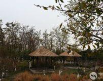 北京大运河森林公园(33)