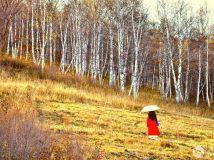 十月坝上秋色美