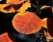 北京金秋——绚丽多彩之北宫国家森林公园(43)