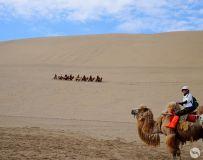 大漠驼铃(3)