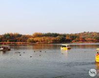 金秋北京奥森公园 红枫银杏彩叶飘飘(67)