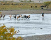 草原 牧马