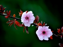 【13年第3期月赛】【春之花语】(组照)