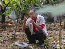 【11期月赛】收栗子 歇息抽颗烟。