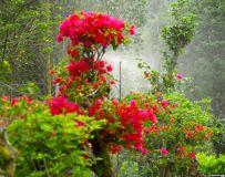 雾里看花,花更美