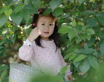 摘樱桃的小姑娘