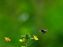 【13年第3期月赛】却叫蜂儿为花忙(组照)