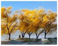 昭平湖的冬天