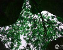 石林—山林耸立、观瞻山外天