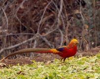 丹江湖湿地鸟类六大美