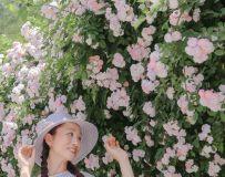 蔷薇花开(9)