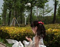 公主与小白鸽