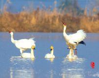 《夫唱妇随》—— 白鹤