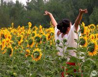 葵花向阳开