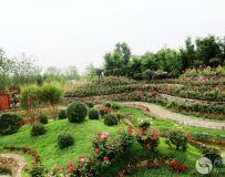 南阳世界月季大观园随拍(20)——淅川园