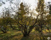 河滨公园之秋(4)