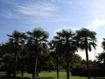 郑州植物园