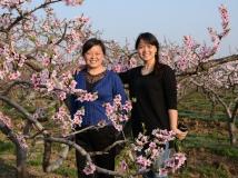 桃花盛开的地方----晁陂