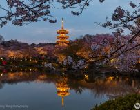 东湖樱花园夜色