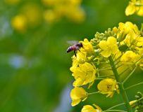 却叫蜂儿为花忙