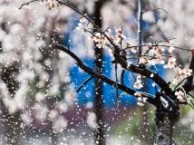 """【""""水源地""""杯2013第3期月赛】春色飞扬"""