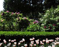 2021北京景山公园春季牡丹文化展(66)