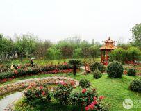 南阳世界月季大观园随拍(21)——淅川园